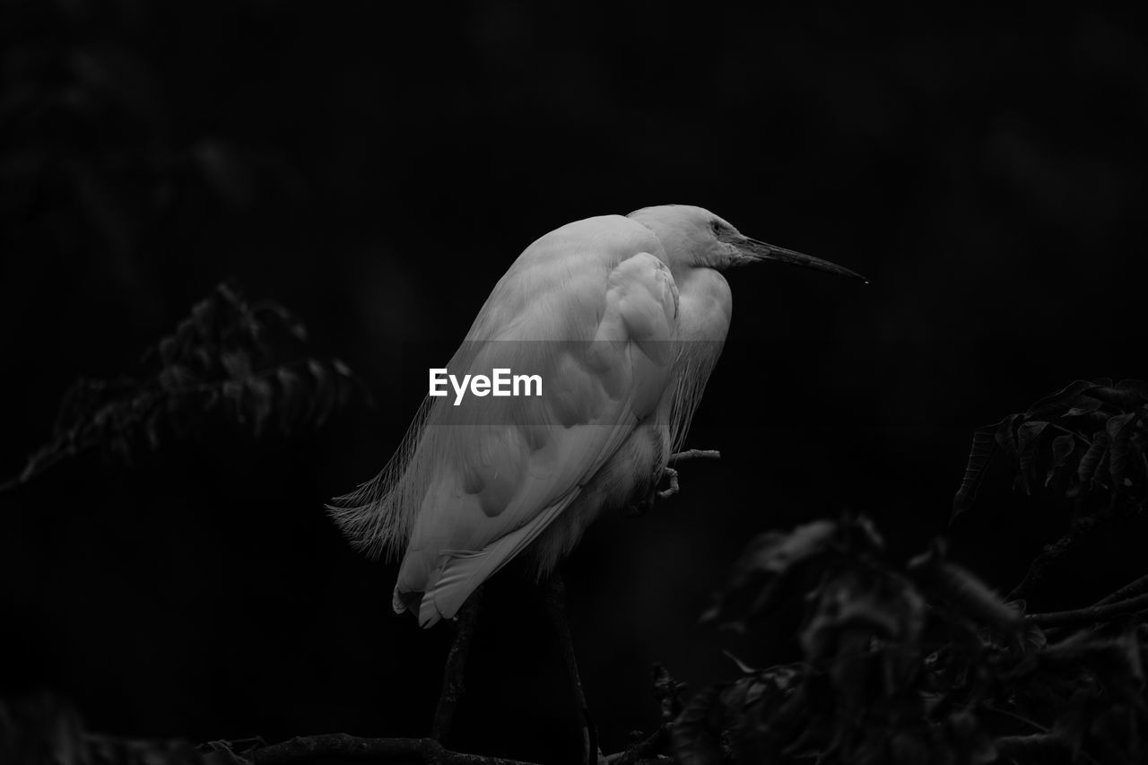 animal wildlife, vertebrate, bird, animal, animals in the wild, animal themes, one animal, focus on foreground, no people, close-up, nature, egret, perching, day, outdoors, beak, plant, selective focus, heron, beauty in nature