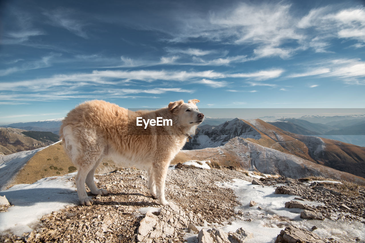 Side view of dog standing on mountain against sky