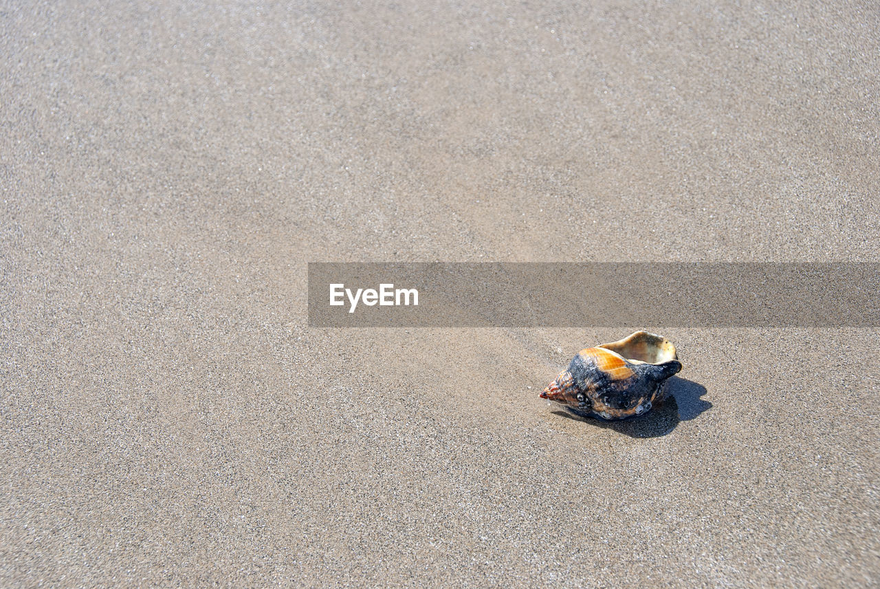 high angle view, one animal, day, animal wildlife, no people, beach, animals in the wild, land, sand, nature, outdoors, vertebrate, sunlight, copy space, crab, textured, bird
