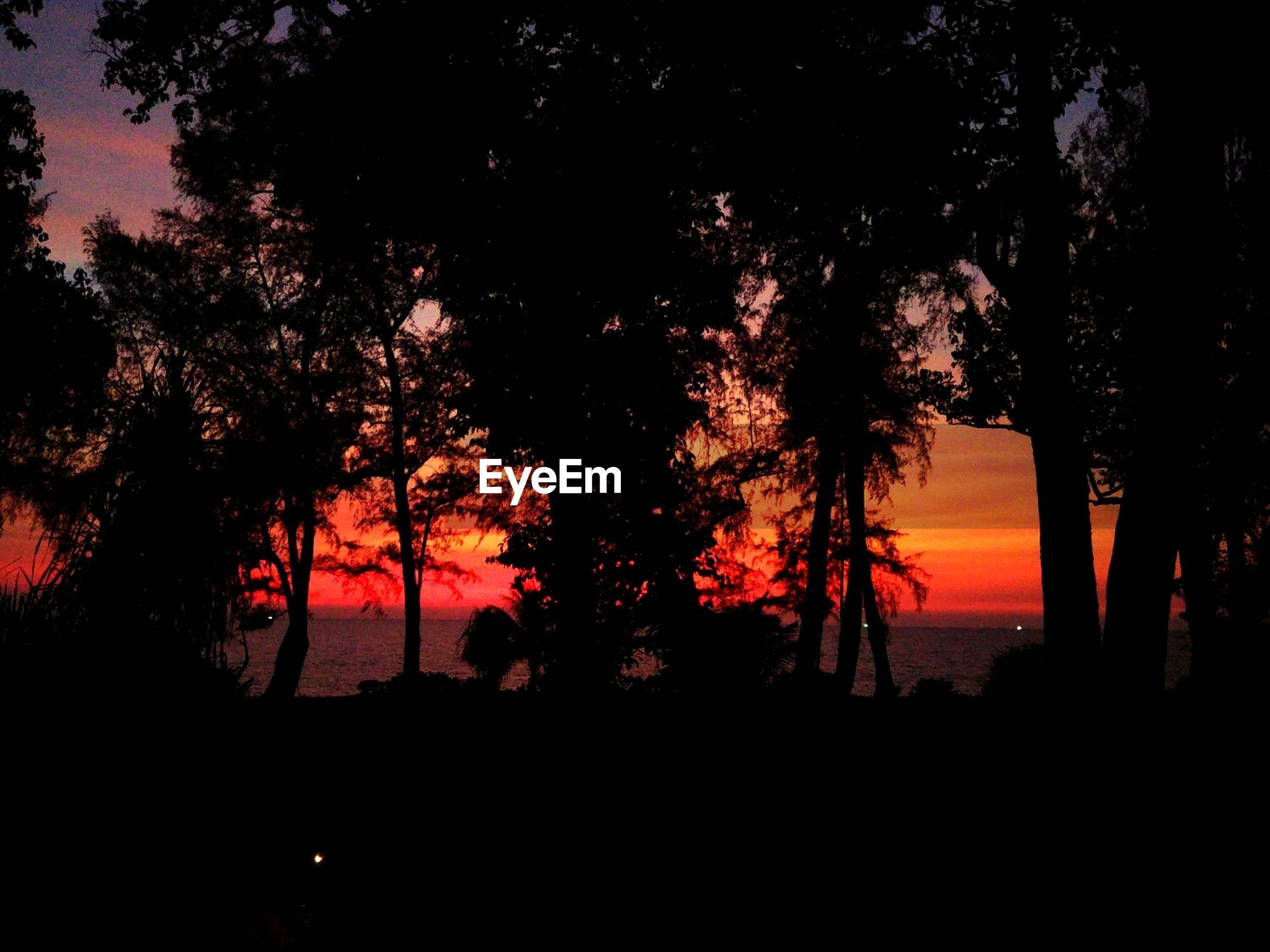 tree, silhouette, sunset, nature, beauty in nature, orange color, tree trunk, tranquility, growth, scenics, tranquil scene, no people, sky, outdoors, branch