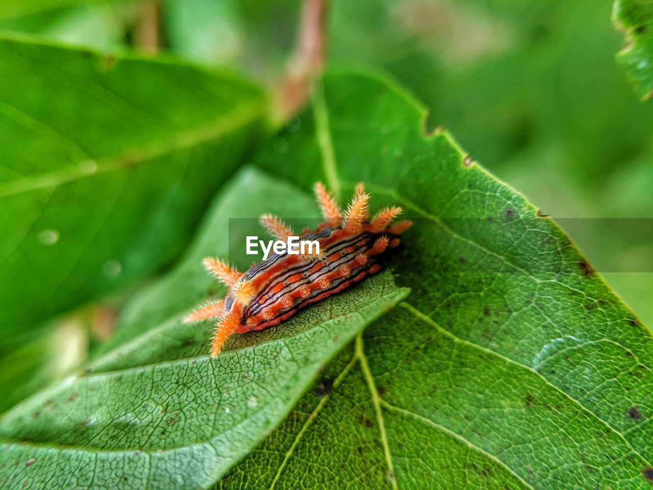 plant part, leaf, green color, animal, close-up, animal themes, nature, plant, animals in the wild, animal wildlife, one animal, day, invertebrate, no people, insect, focus on foreground, orange color, growth, outdoors, leaf vein, leaves