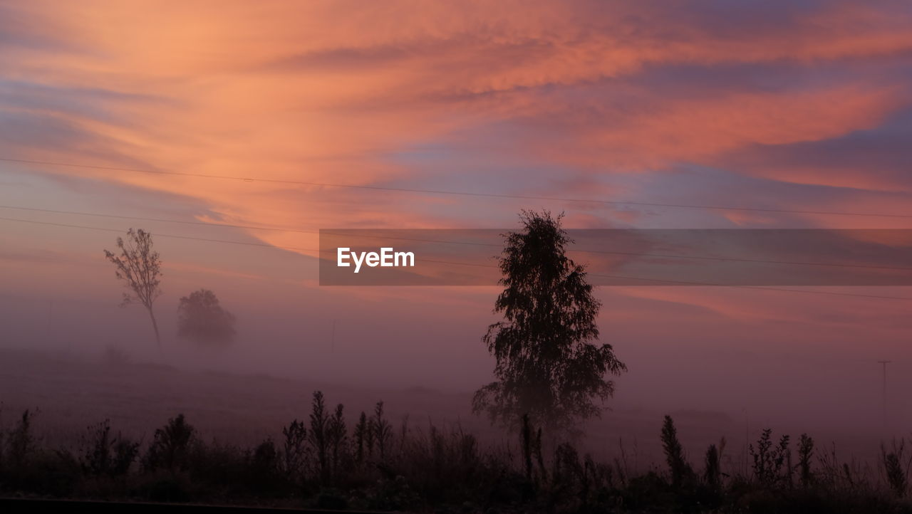 sky, beauty in nature, tree, sunset, plant, cloud - sky, tranquility, scenics - nature, tranquil scene, silhouette, non-urban scene, no people, idyllic, orange color, nature, growth, environment, outdoors, fog, hazy