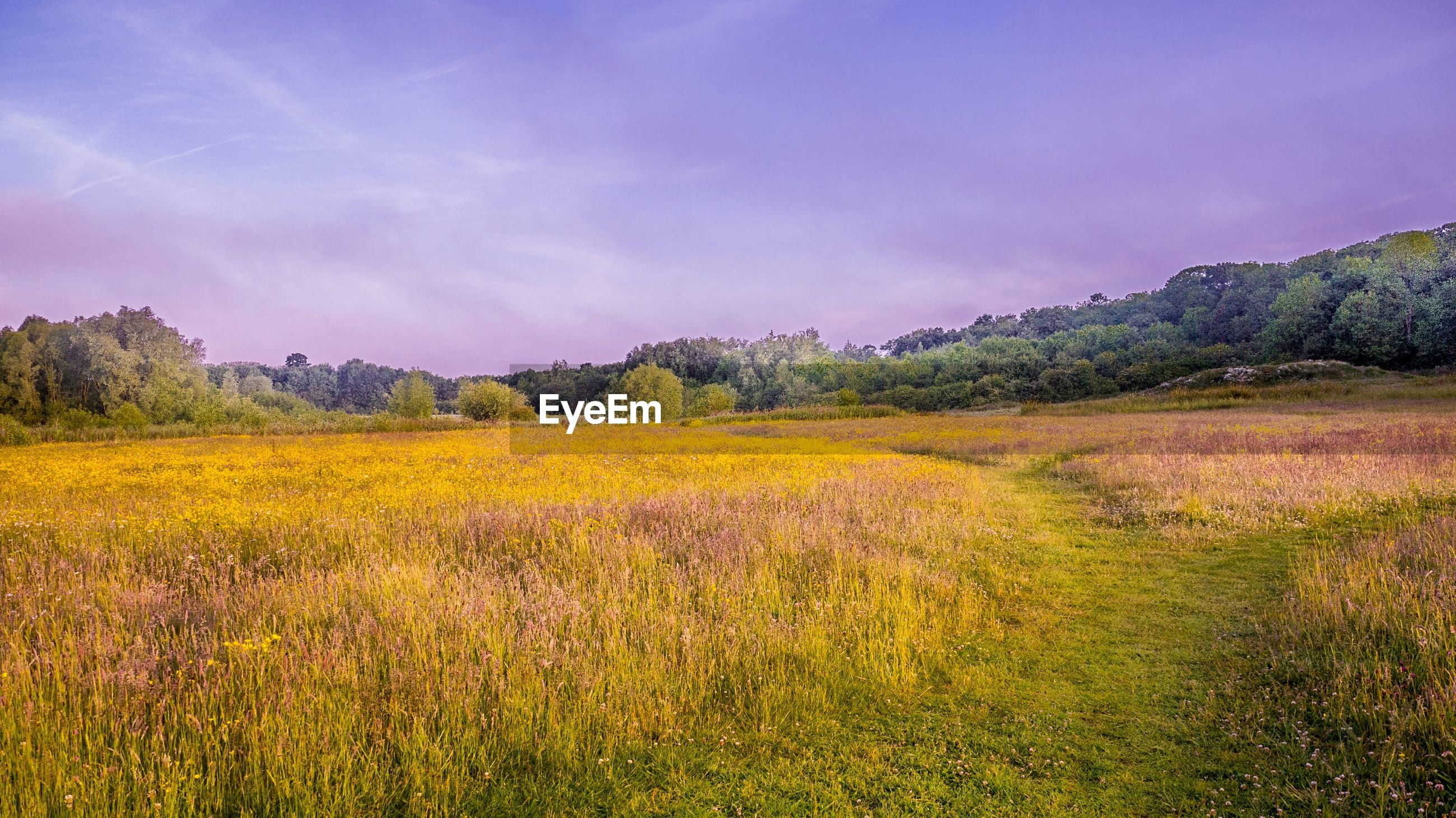 Scenic view of field against sky
