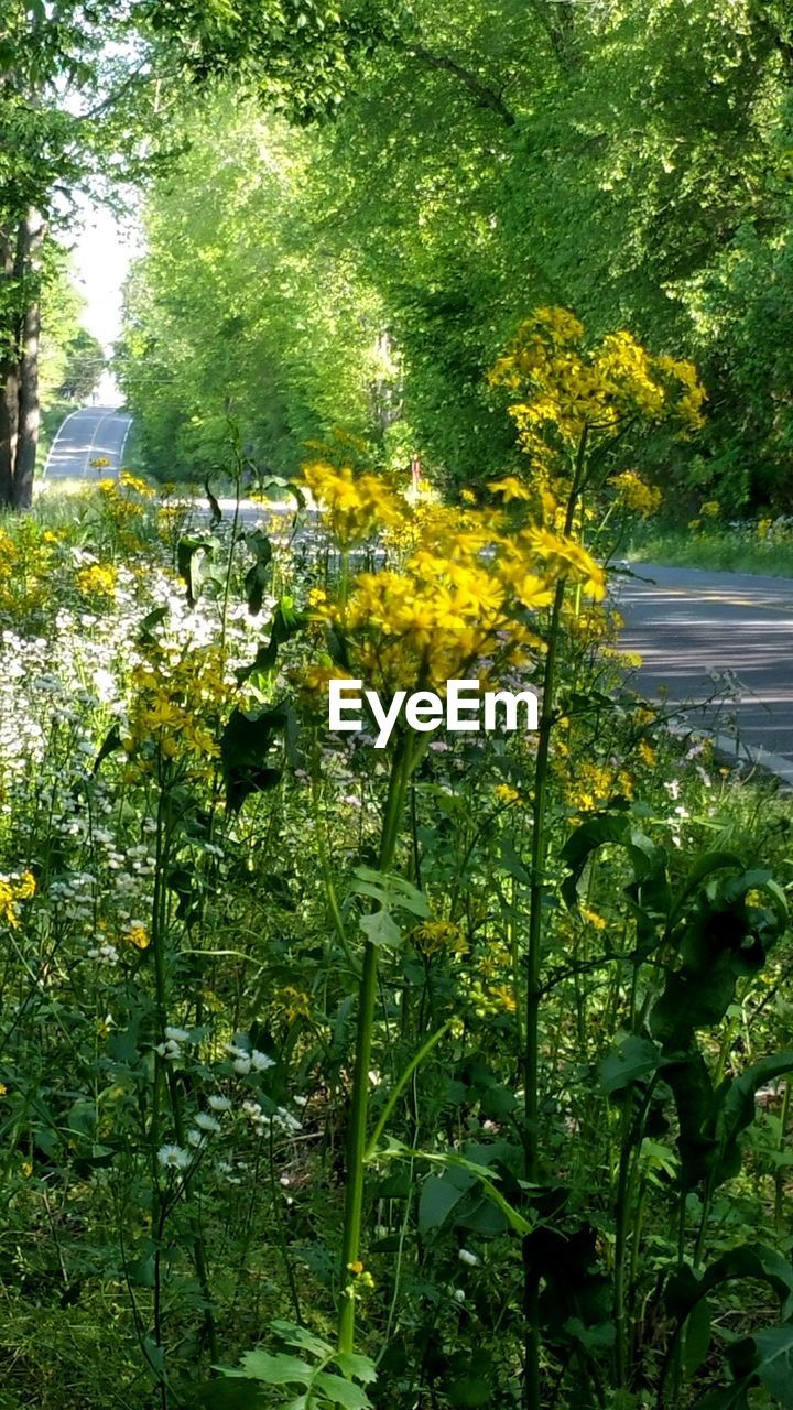 growth, yellow, nature, plant, green color, flower, tree, outdoors, day, beauty in nature, no people, leaf, freshness, fragility, flower head