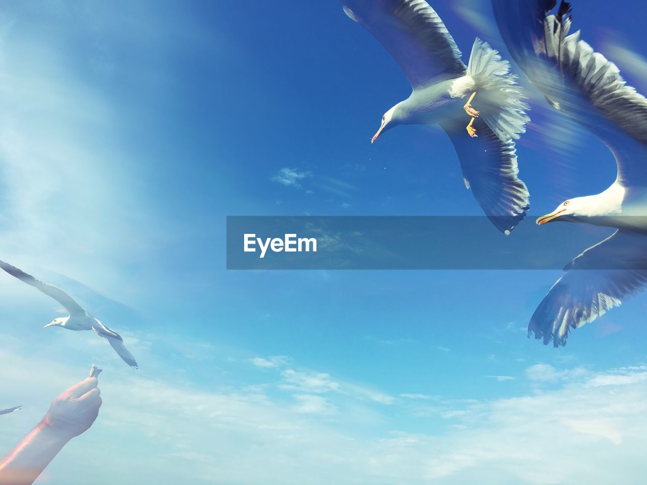 flying, spread wings, mid-air, bird, low angle view, animal themes, day, outdoors, holding, sky, nature, animals in the wild, togetherness, beauty in nature, close-up, no people