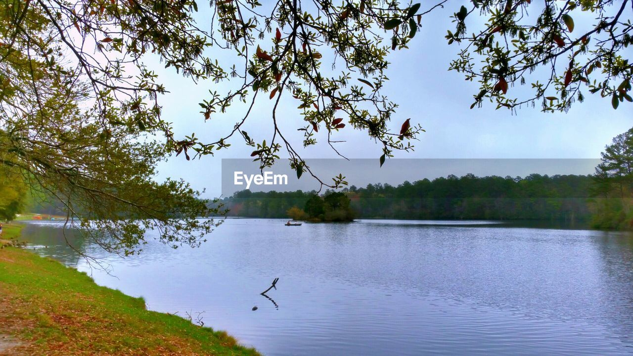 tree, lake, animal themes, one animal, animals in the wild, bird, nature, water, beauty in nature, day, animal wildlife, outdoors, tranquil scene, no people, tranquility, scenics, growth, sky, flying, branch, spread wings, swan