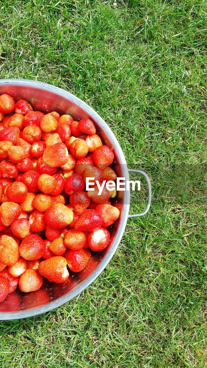 grass, fruit, food, food and drink, red, healthy eating, high angle view, freshness, no people, field, growth, green color, day, outdoors, nature