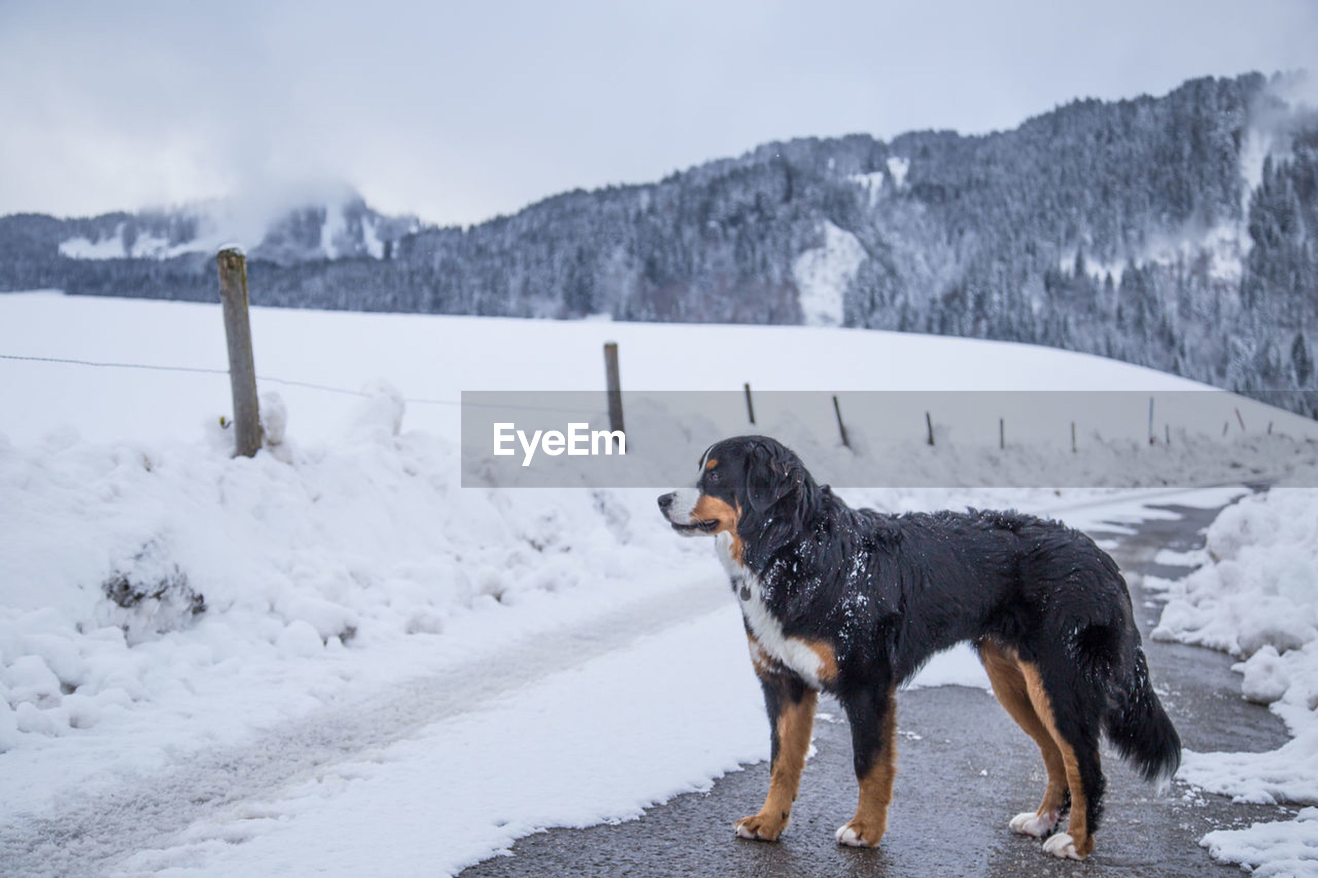 cold temperature, dog, snow, winter, animal themes, domestic animals, pets, one animal, nature, weather, outdoors, no people, mammal, day, beauty in nature, mountain, scenics, water, sky