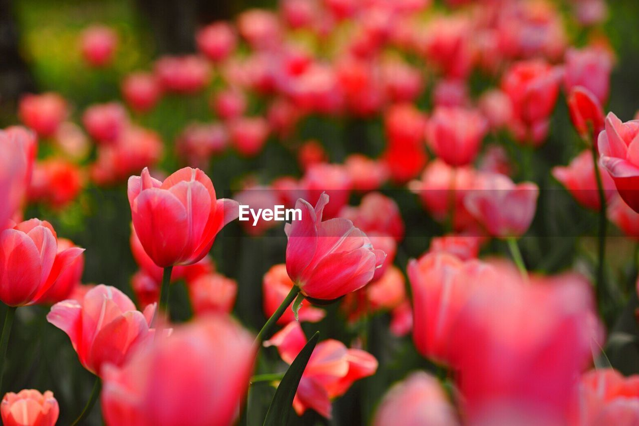 flower, growth, plant, petal, nature, beauty in nature, blooming, freshness, fragility, no people, flower head, outdoors, close-up, day