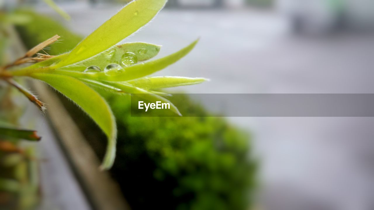 growth, plant, green color, close-up, selective focus, beauty in nature, no people, plant part, day, drop, water, nature, wet, leaf, fragility, vulnerability, focus on foreground, freshness, outdoors, rain, raindrop, rainy season, dew, sepal