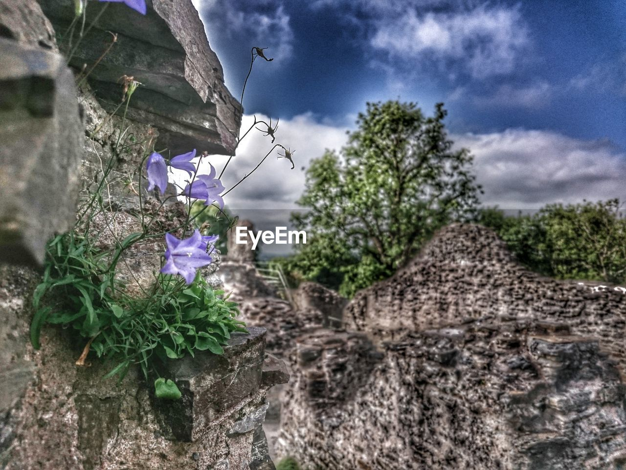 growth, flower, nature, plant, beauty in nature, outdoors, fragility, no people, day, tree, sky, cloud - sky, blooming, low angle view, freshness, close-up, flower head