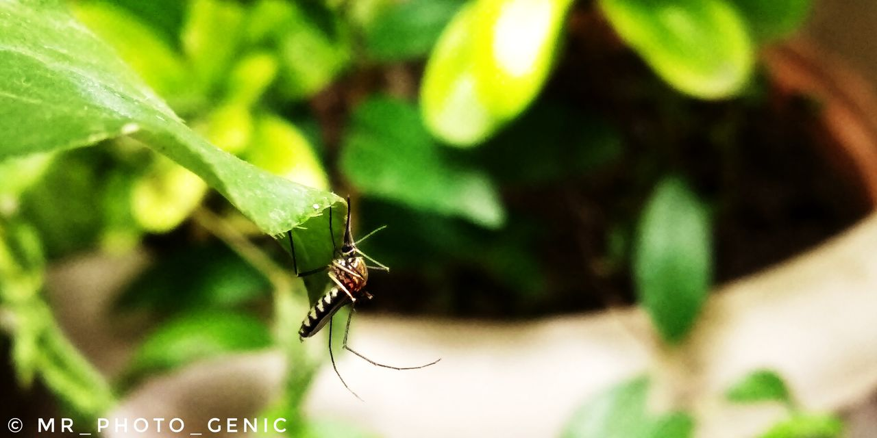 insect, invertebrate, animals in the wild, animal themes, animal, animal wildlife, leaf, plant part, one animal, green color, close-up, plant, selective focus, nature, day, growth, focus on foreground, zoology, no people, arthropod, outdoors