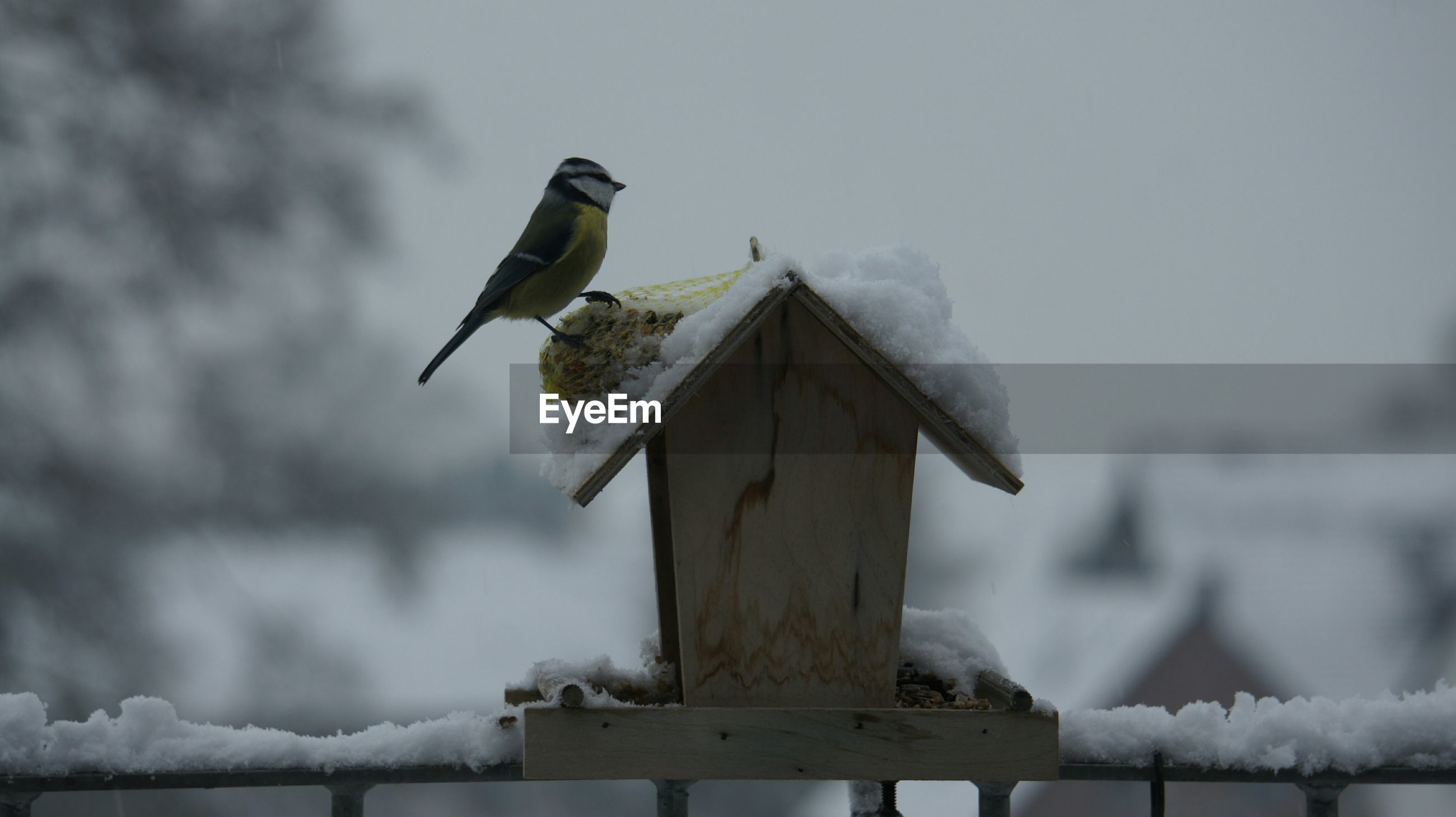 Side view of bird perching on snow covered birdhouse