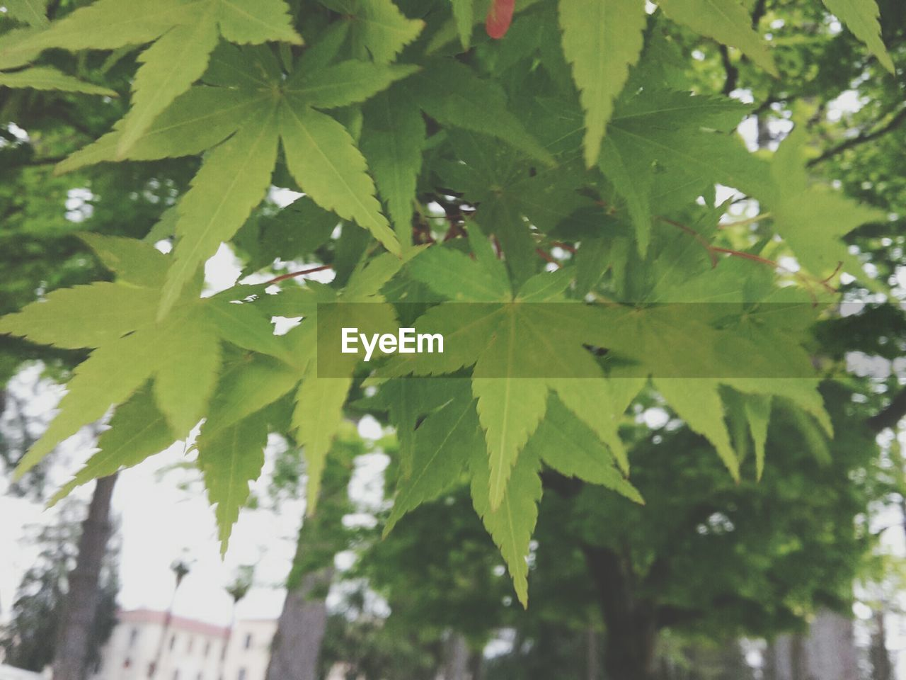 leaf, green color, growth, nature, day, no people, outdoors, tree, close-up, beauty in nature