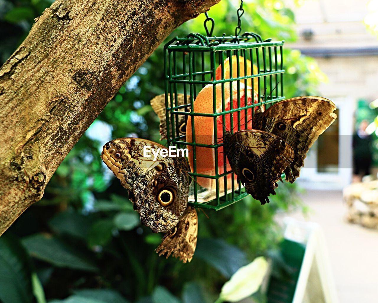 animal themes, one animal, animals in the wild, animal wildlife, no people, focus on foreground, day, leaf, nature, perching, butterfly - insect, close-up, bird, food, outdoors, mammal