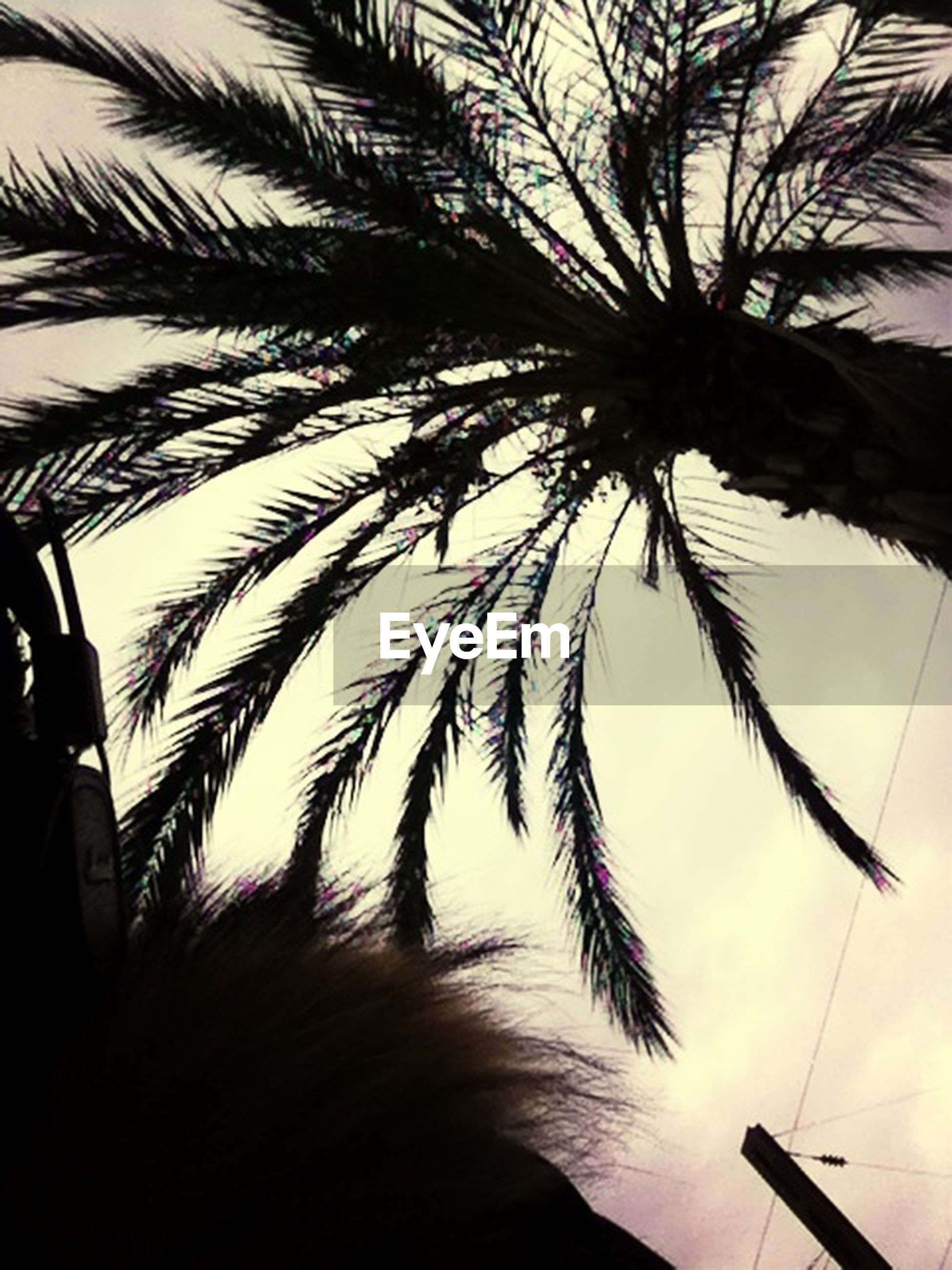 palm tree, silhouette, growth, tree, sky, low angle view, sunset, nature, palm leaf, tranquility, beauty in nature, outdoors, part of, tree trunk, outline, coconut palm tree, day, plant, dusk, no people