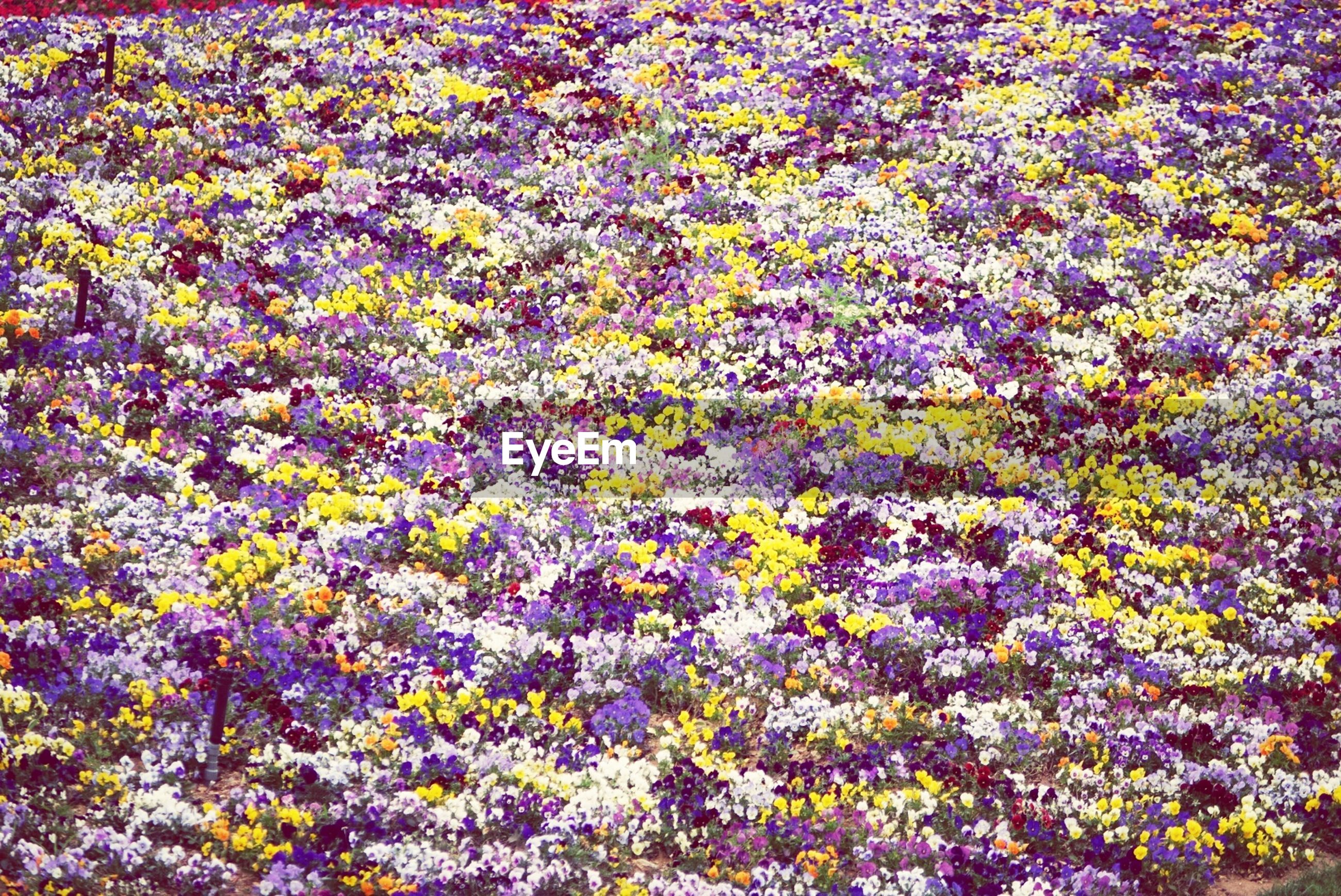 Colorful flowers covering meadow