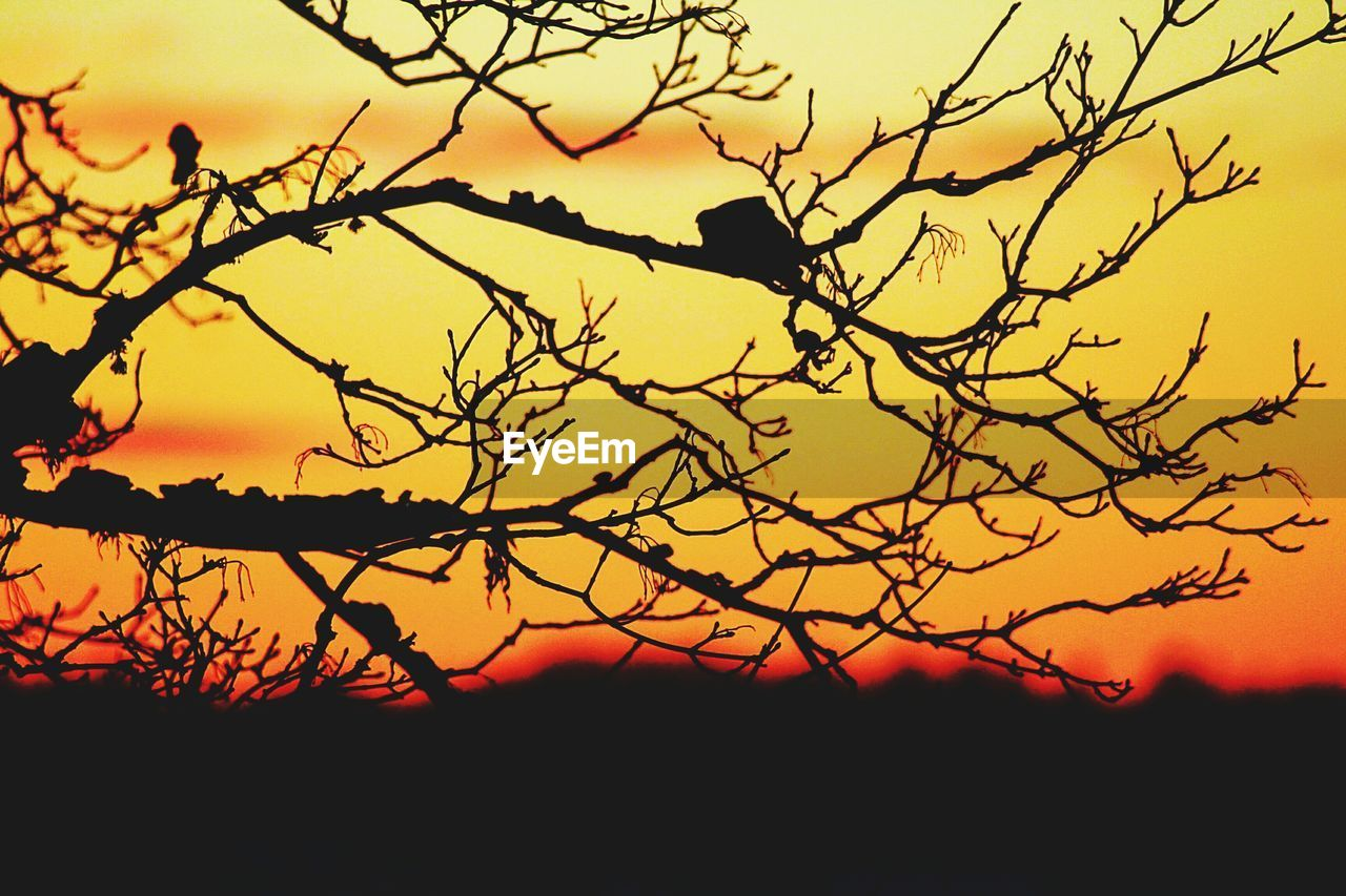 silhouette, sunset, bird, nature, beauty in nature, animals in the wild, animal themes, one animal, tree, scenics, outdoors, branch, sky, tranquility, tranquil scene, no people, animal wildlife, clear sky, perching, bare tree, landscape, day
