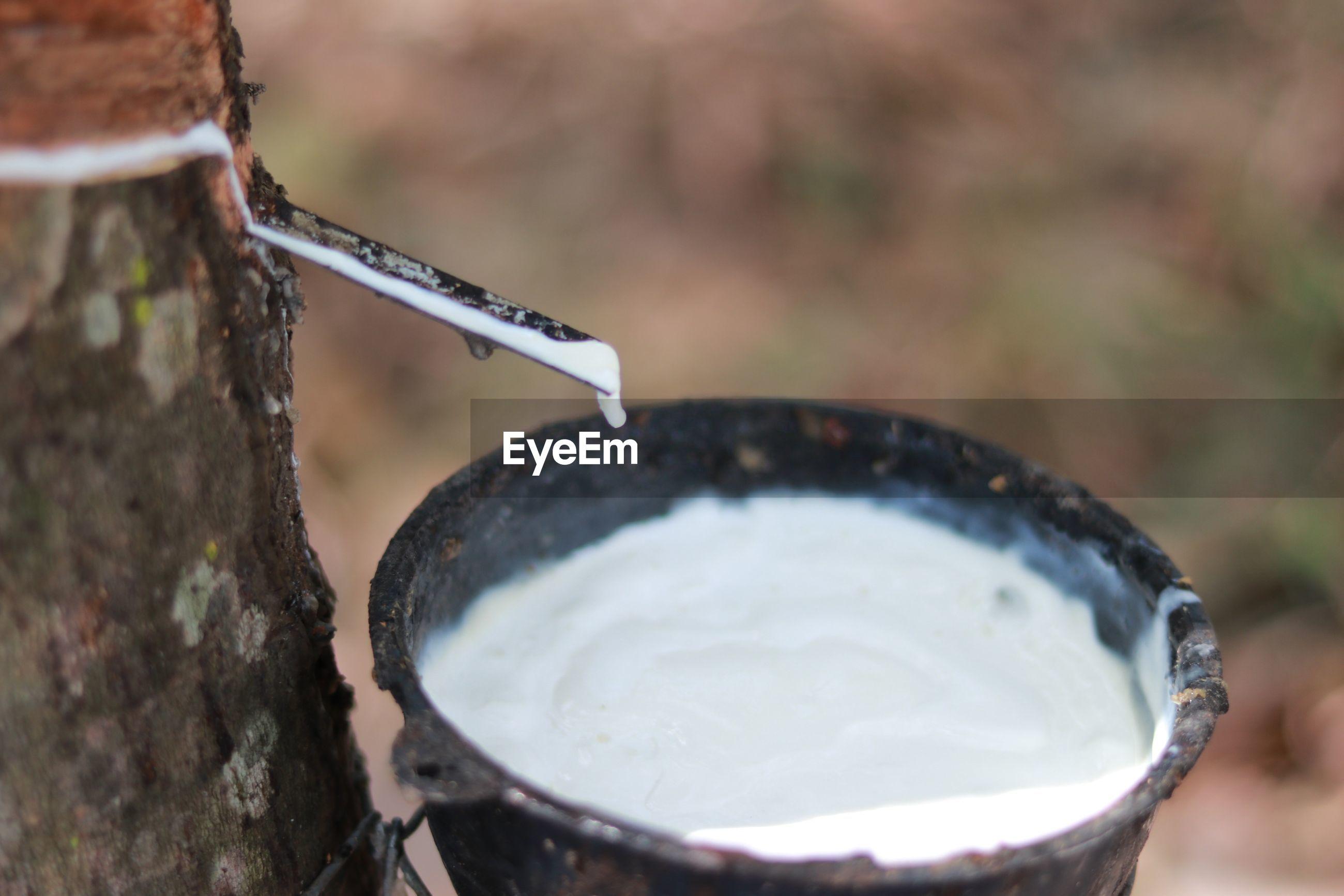 Close-up of latex on tree