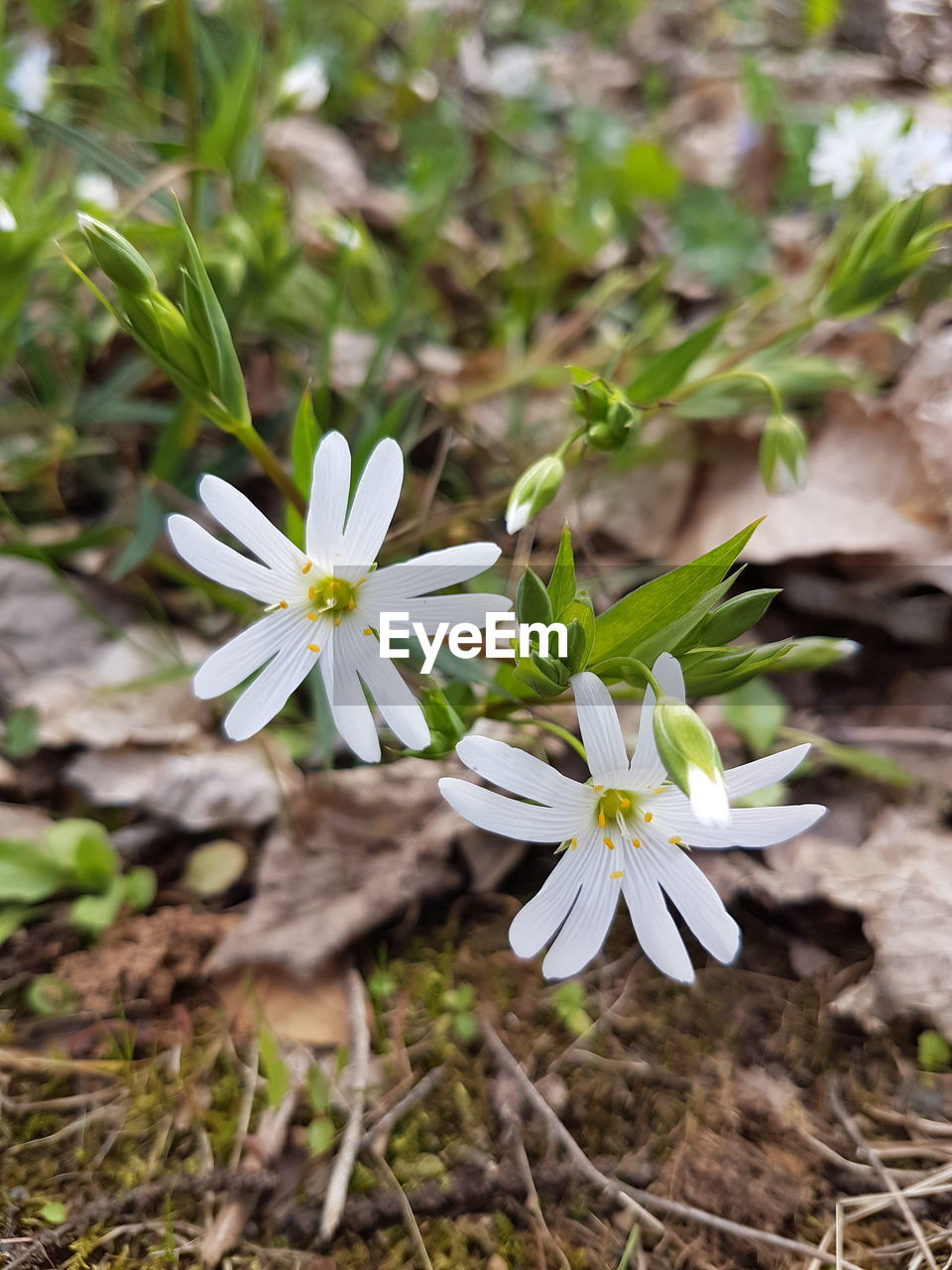 flower, nature, fragility, growth, white color, petal, freshness, plant, beauty in nature, flower head, blooming, no people, day, outdoors, close-up