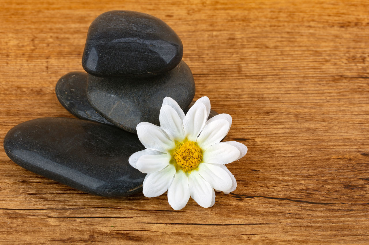 flower, flowering plant, plant, freshness, table, close-up, wood - material, beauty in nature, petal, fragility, vulnerability, no people, indoors, white color, still life, nature, inflorescence, high angle view, flower head, pebble