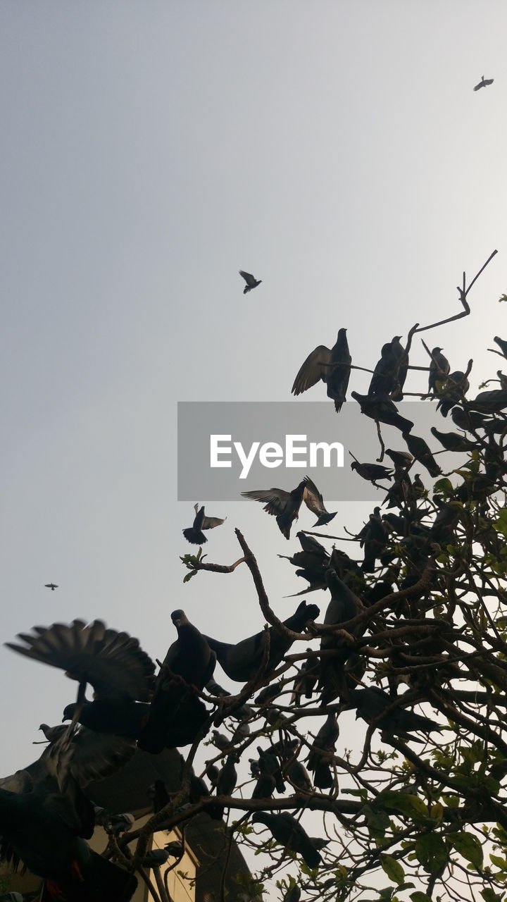 bird, animals in the wild, animal themes, flying, animal wildlife, nature, low angle view, flock of birds, large group of animals, clear sky, outdoors, no people, beauty in nature, day, sky, spread wings, tree