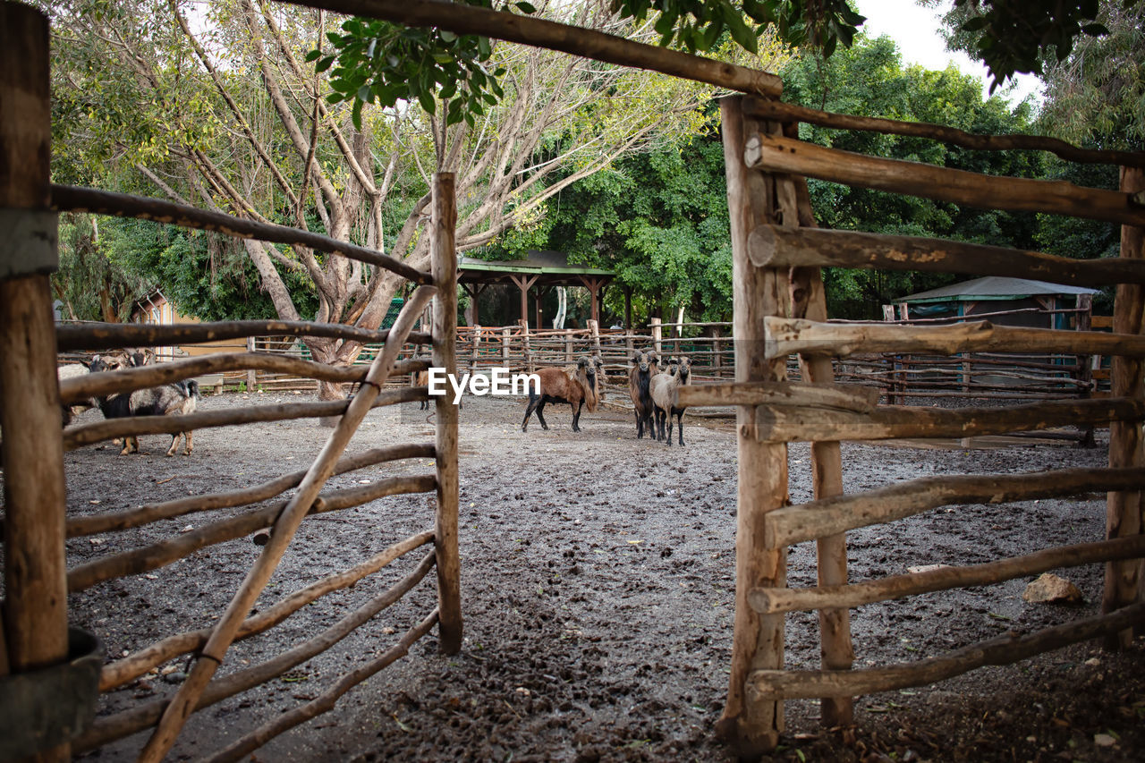 tree, mammal, livestock, domestic animals, plant, animal themes, domestic, animal, pets, wood - material, group of animals, nature, day, land, horse, vertebrate, forest, no people, agriculture, boundary, herbivorous, outdoors, animal pen