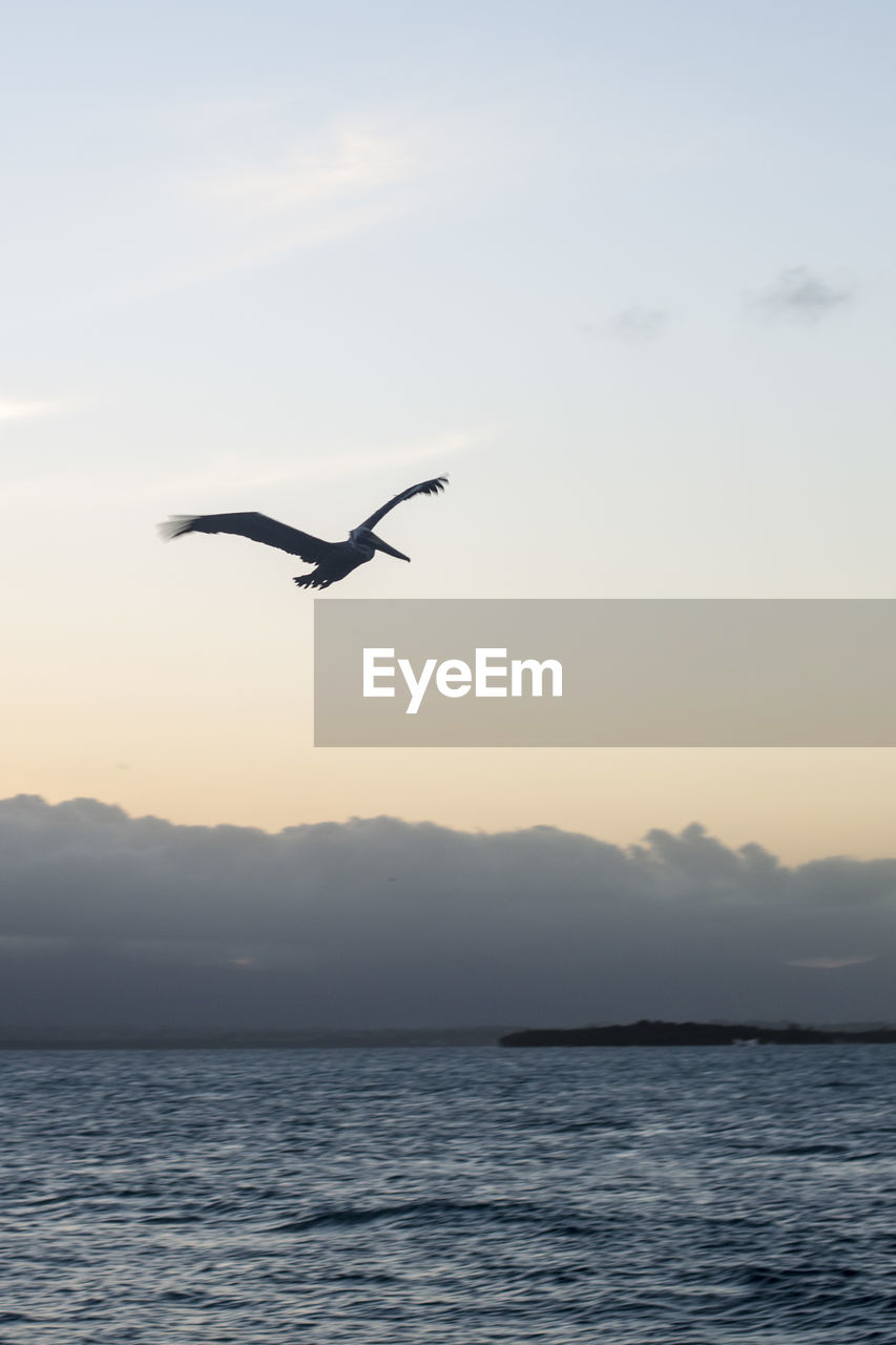 flying, animal themes, animal, sky, bird, water, beauty in nature, sunset, spread wings, animals in the wild, vertebrate, one animal, animal wildlife, scenics - nature, mid-air, tranquil scene, waterfront, tranquility, nature, no people, outdoors, seagull