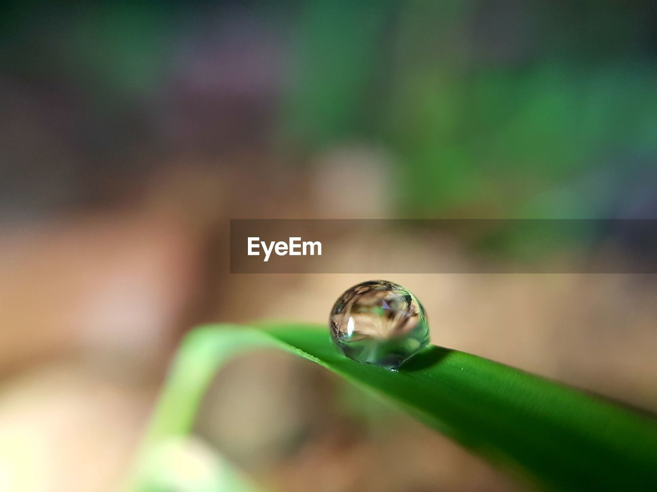 selective focus, close-up, one animal, animals in the wild, green color, focus on foreground, no people, animal themes, day, animal wildlife, nature, outdoors, fragility, ladybug