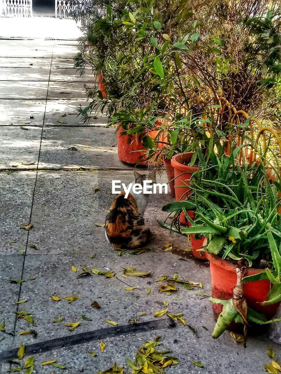 Cat On Plant