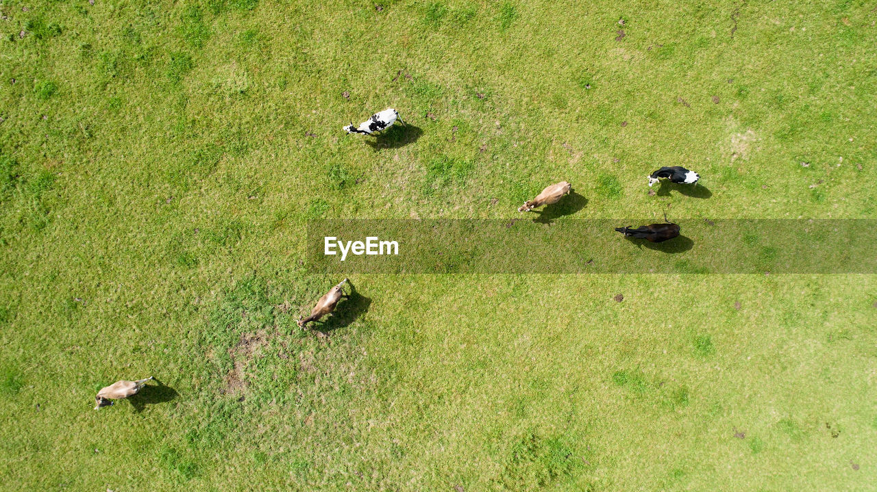 grass, group of animals, animal themes, animal, plant, animal wildlife, animals in the wild, high angle view, nature, land, bird, vertebrate, field, green color, day, no people, medium group of animals, mammal, outdoors, duck, animal family