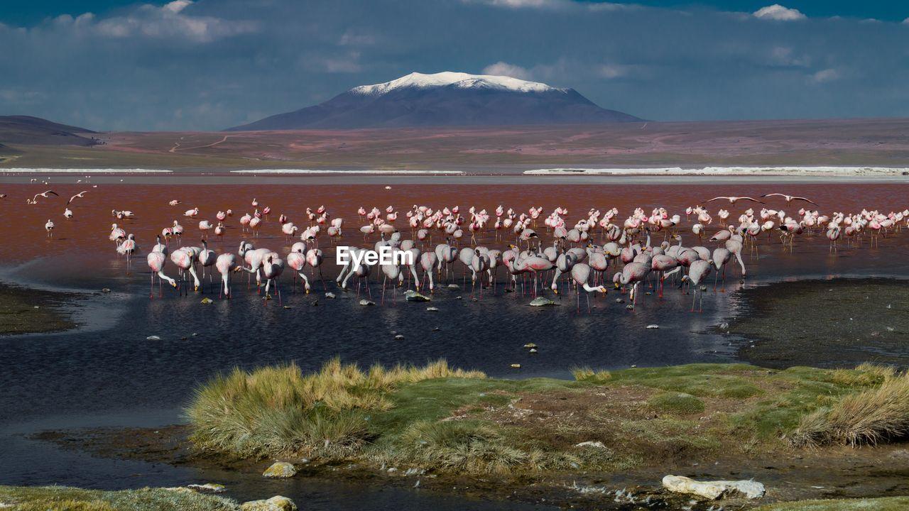 Flamingoes Perching In Lake