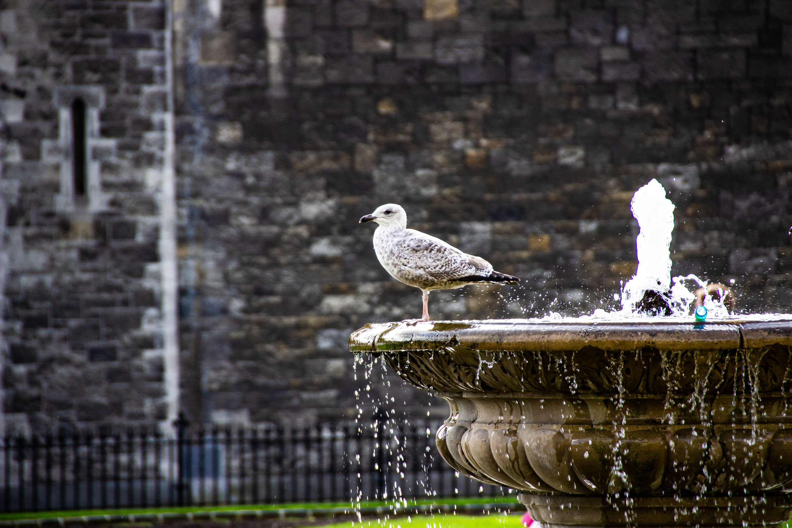 SEAGULL PERCHING ON FOUNTAIN AGAINST WALL