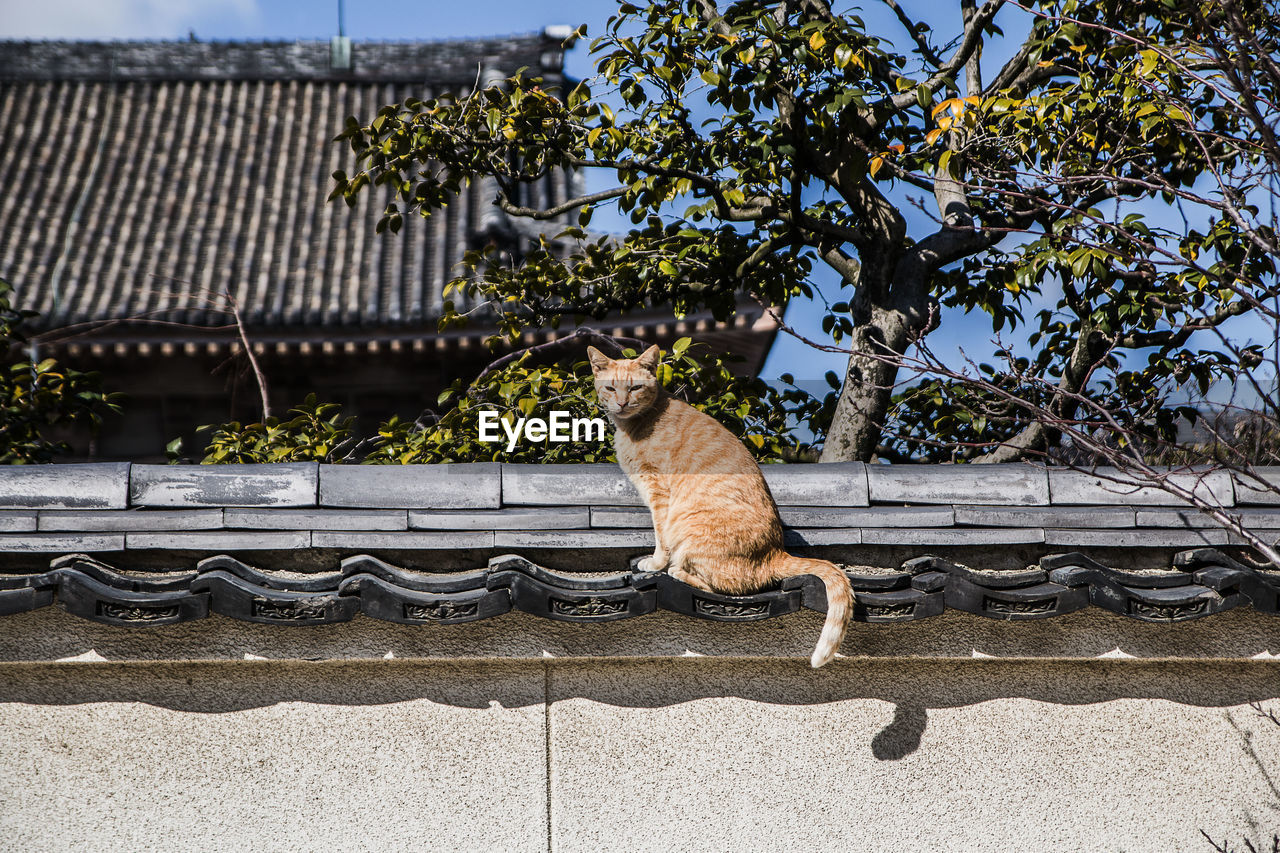 animal themes, mammal, one animal, feline, cat, animal, pets, domestic, plant, tree, domestic cat, vertebrate, domestic animals, nature, day, no people, architecture, roof, built structure, sitting, outdoors, roof tile