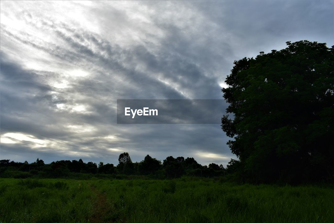 plant, cloud - sky, tree, sky, scenics - nature, tranquility, tranquil scene, beauty in nature, landscape, field, grass, land, nature, environment, growth, no people, non-urban scene, green color, idyllic, outdoors