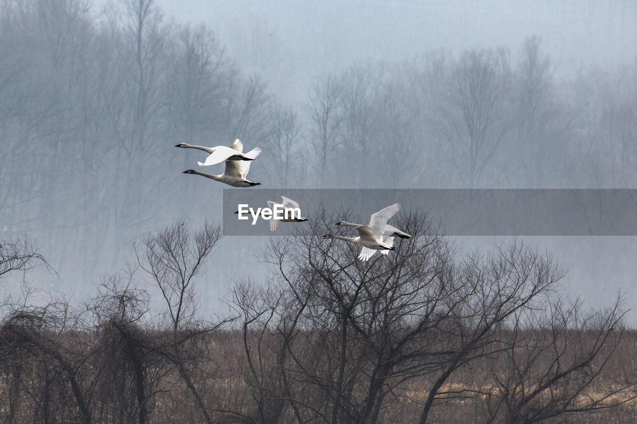 Birds Flying Over Bare Trees