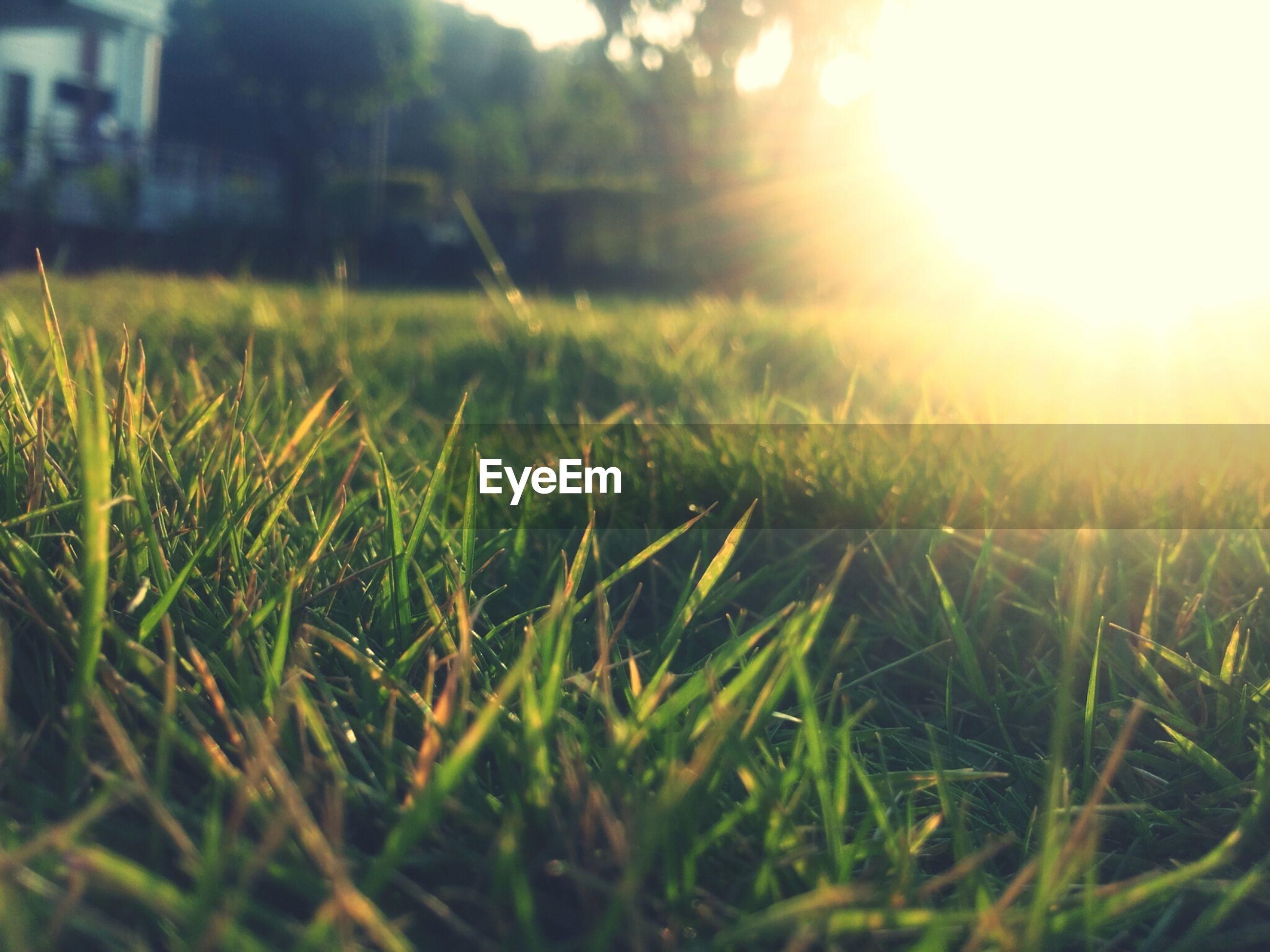 Grass in sunlight