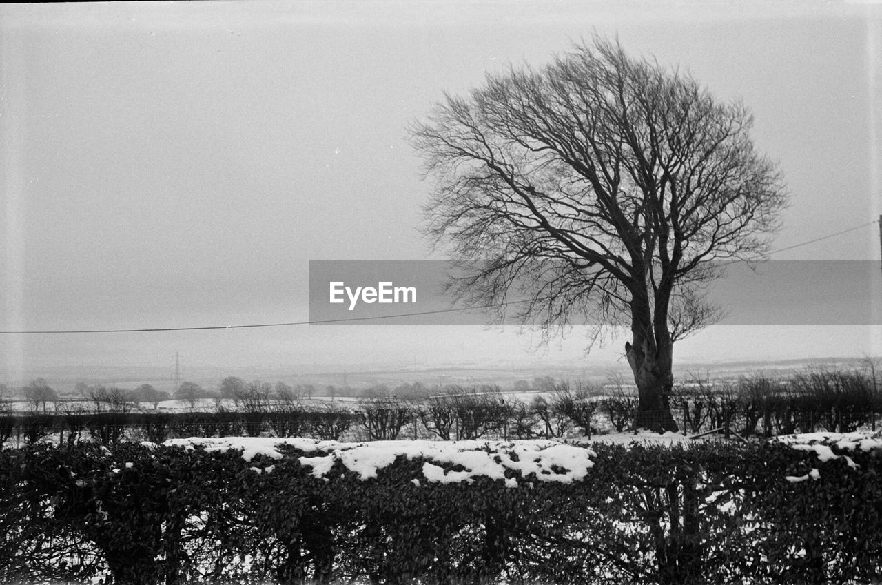 bare tree, winter, snow, cold temperature, landscape, tree, nature, tranquility, beauty in nature, tranquil scene, solitude, lone, branch, field, outdoors, scenics, day, no people, clear sky, sky