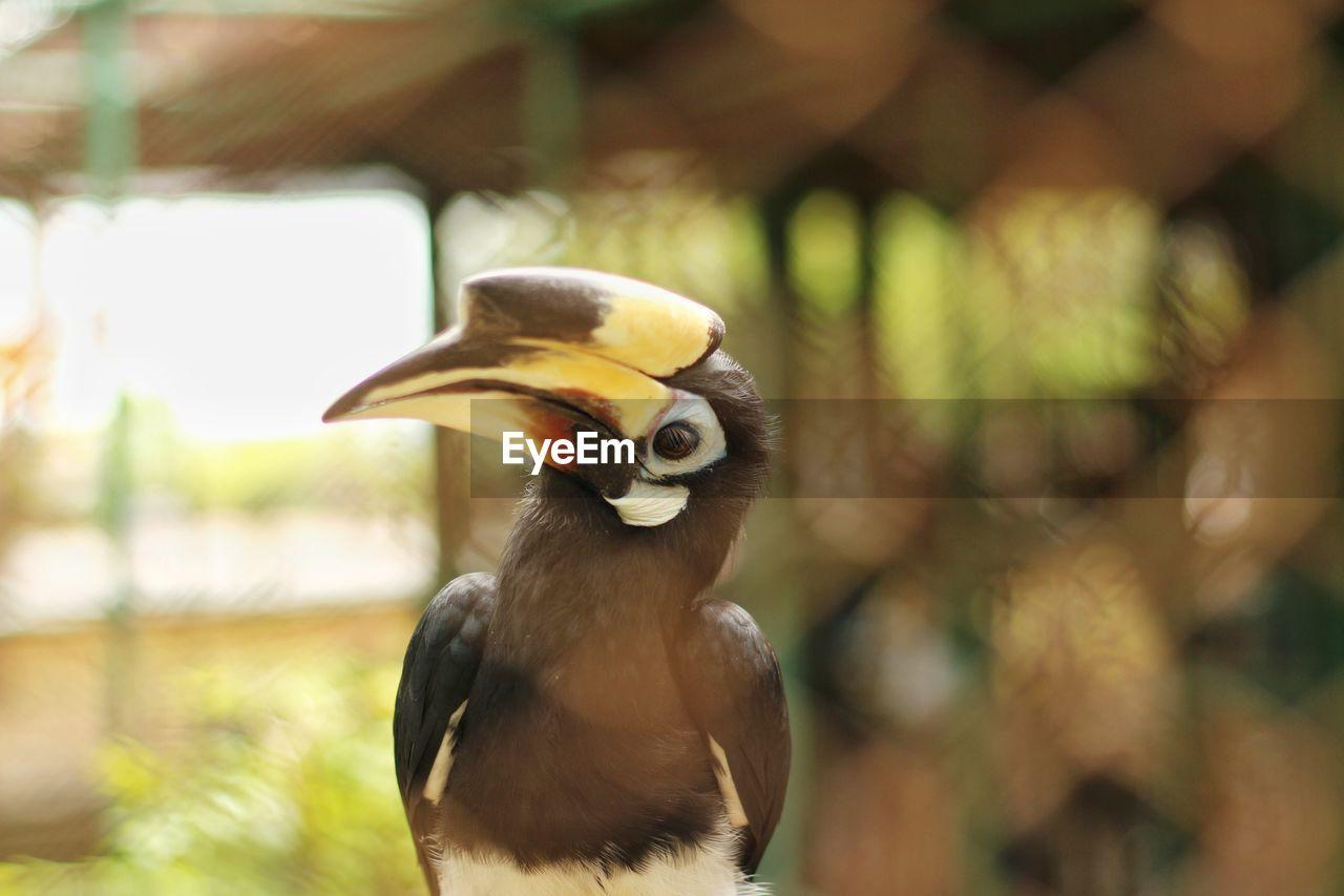 animals in the wild, animal wildlife, bird, vertebrate, one animal, focus on foreground, beak, hornbill, day, no people, nature, close-up, outdoors, looking, yellow, animal body part, animals in captivity