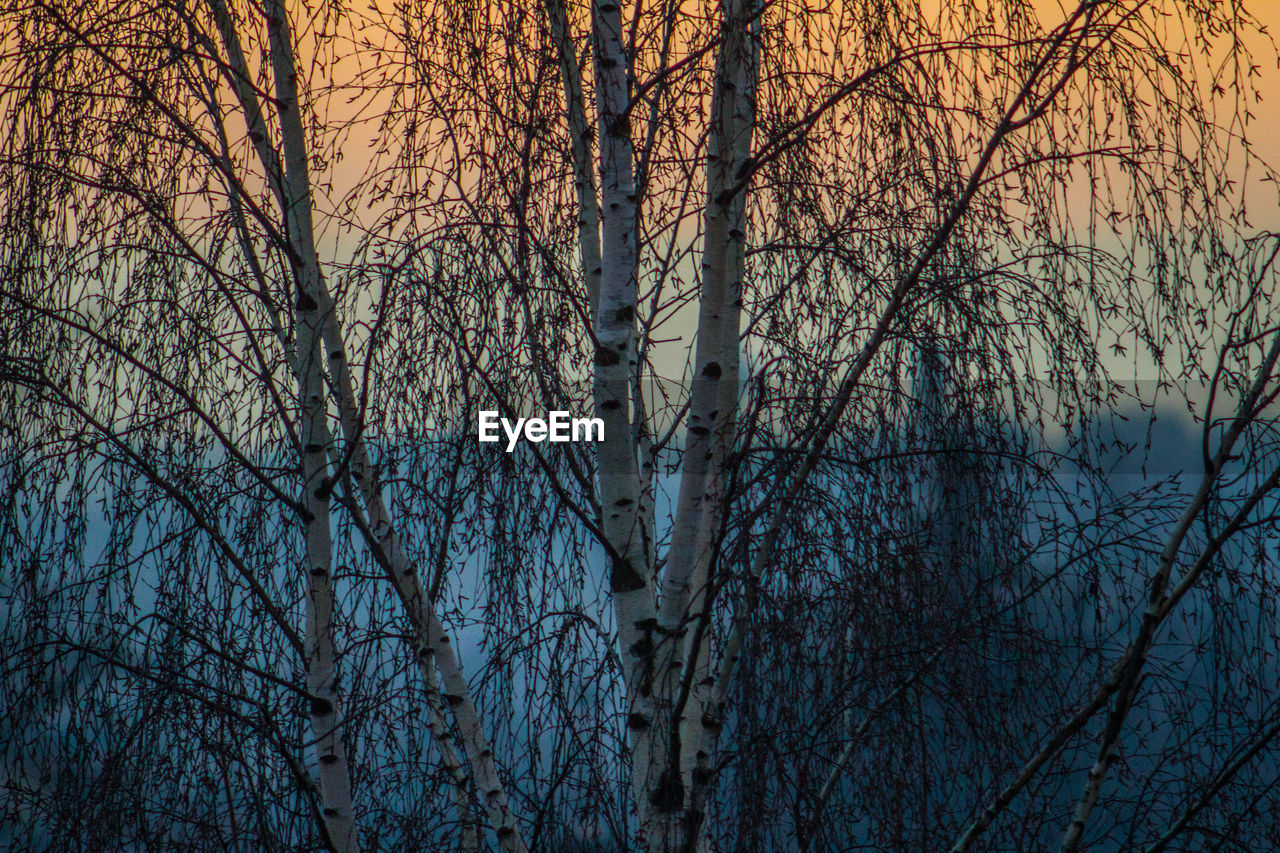 bare tree, tree, forest, branch, nature, no people, outdoors, forest fire, day, water, sky