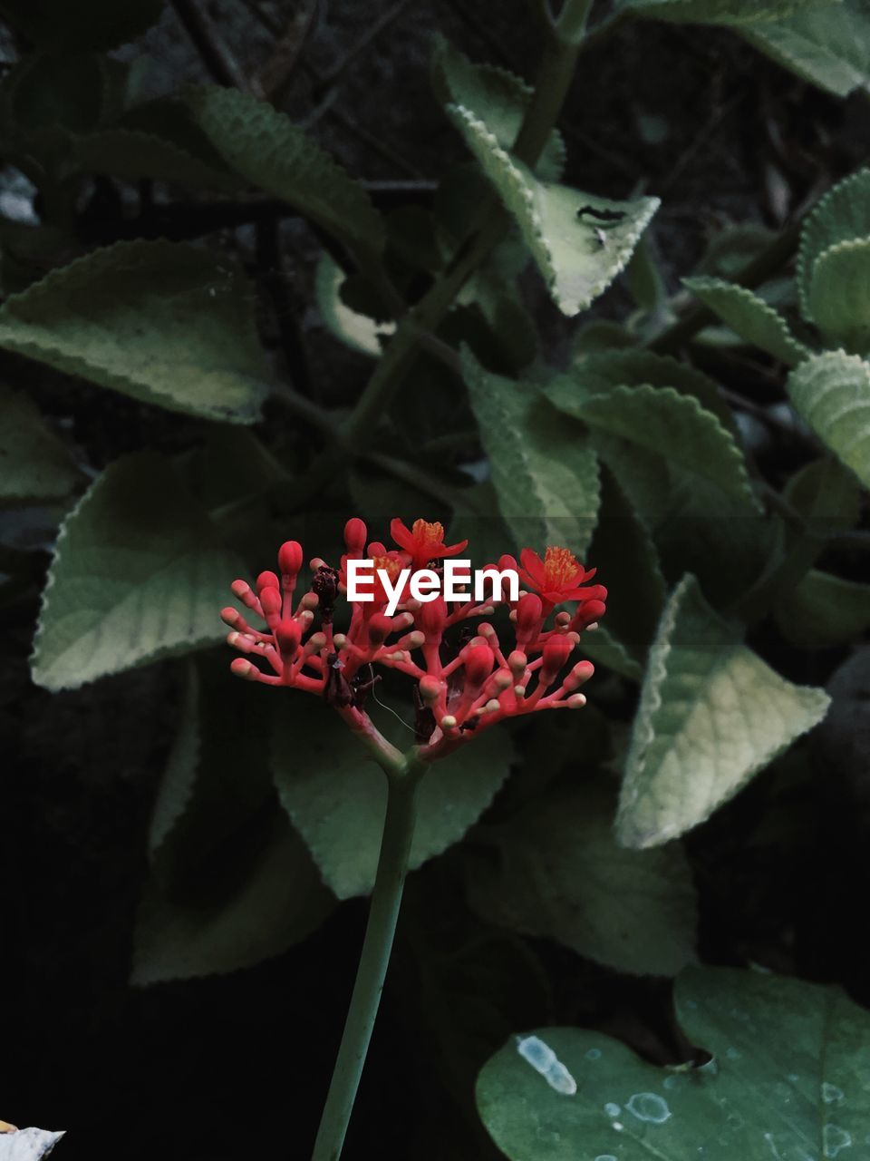 flower, growth, beauty in nature, plant, nature, fragility, red, petal, freshness, flower head, green color, leaf, outdoors, no people, blooming, day, close-up, zinnia