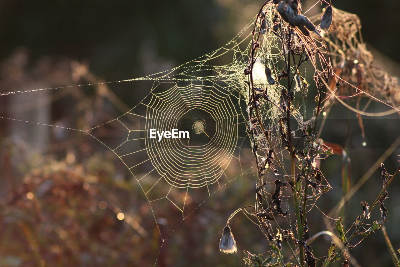 spider web, web, focus on foreground, nature, no people, fragility, close-up, trapped, outdoors, day, spider, complexity, beauty in nature