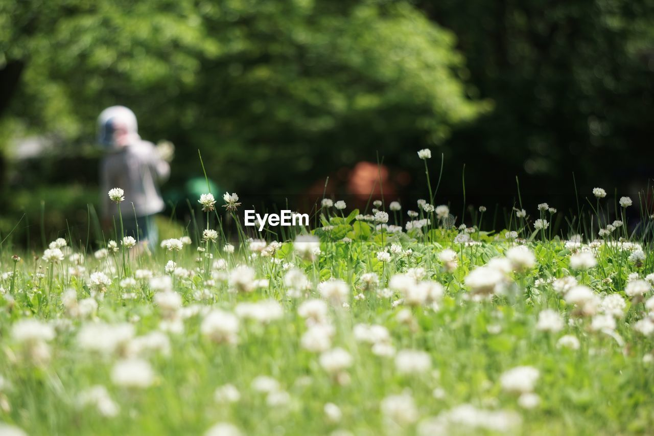 flower, selective focus, nature, growth, grass, field, beauty in nature, outdoors, day, fragility, plant, freshness, no people