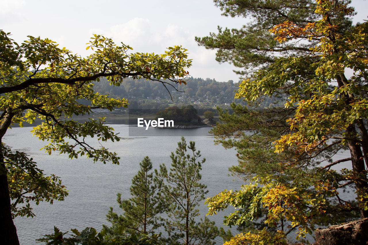 tree, plant, water, beauty in nature, tranquility, tranquil scene, scenics - nature, nature, autumn, sky, growth, no people, non-urban scene, change, day, lake, branch, forest, idyllic, outdoors, autumn collection