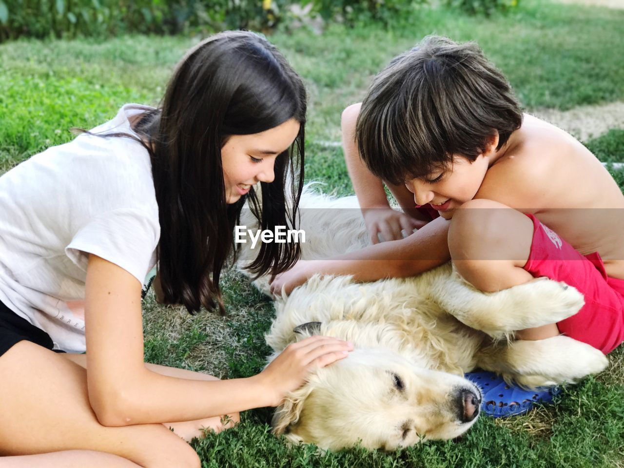 Close-Up Of Siblings Playing With Dog