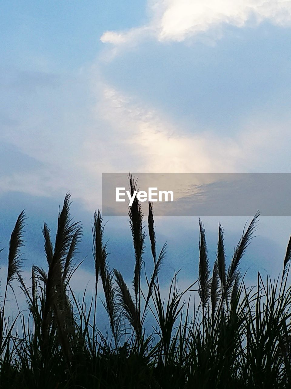 growth, sky, nature, tranquility, tranquil scene, no people, plant, beauty in nature, scenics, outdoors, day