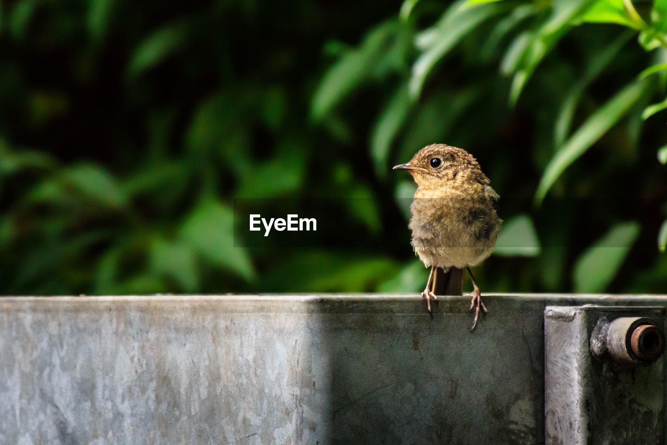 Wren bird sitting on trash bin