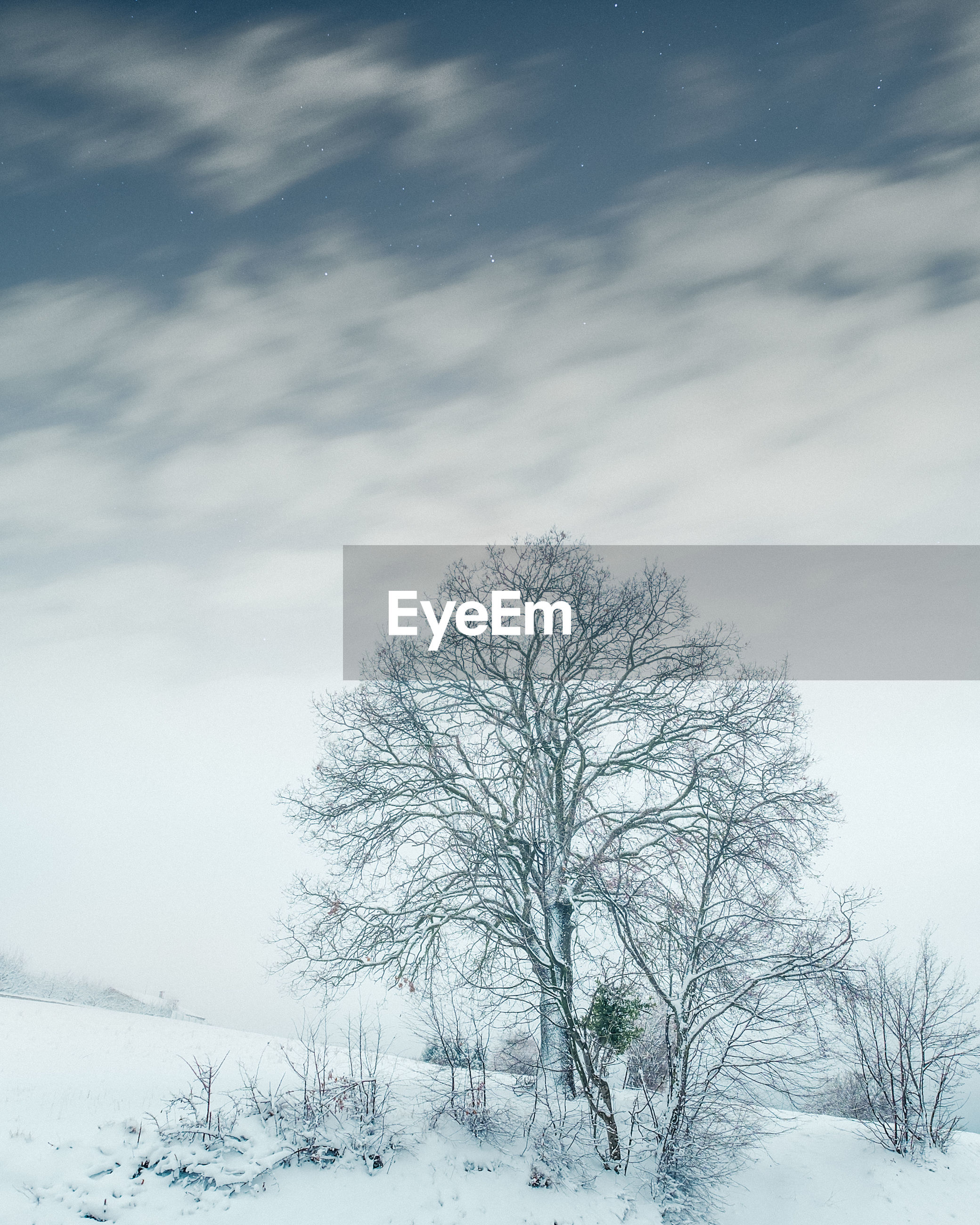 BARE TREE IN SNOW COVERED LANDSCAPE