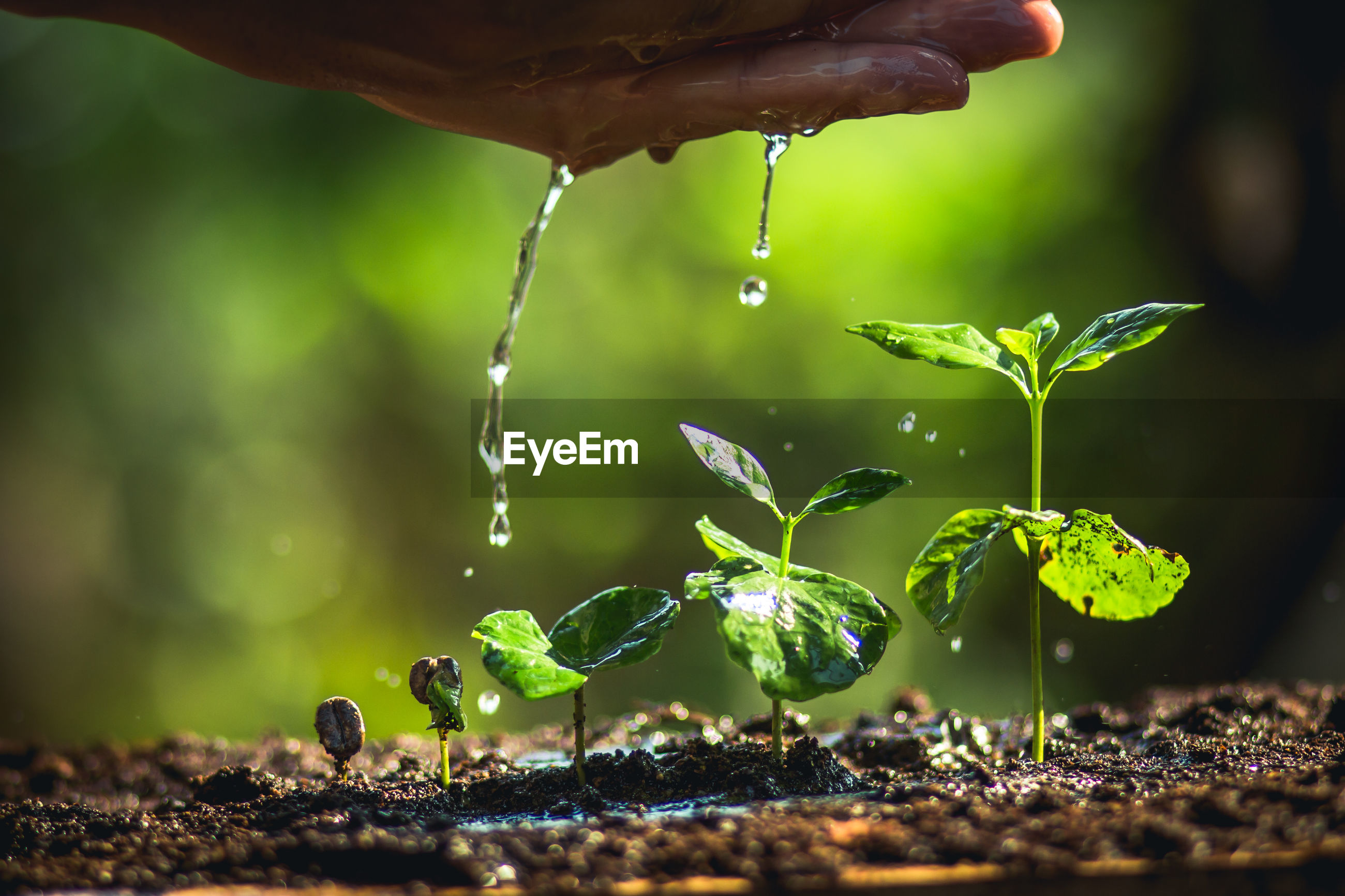 Cropped image of hands pouring water on plants