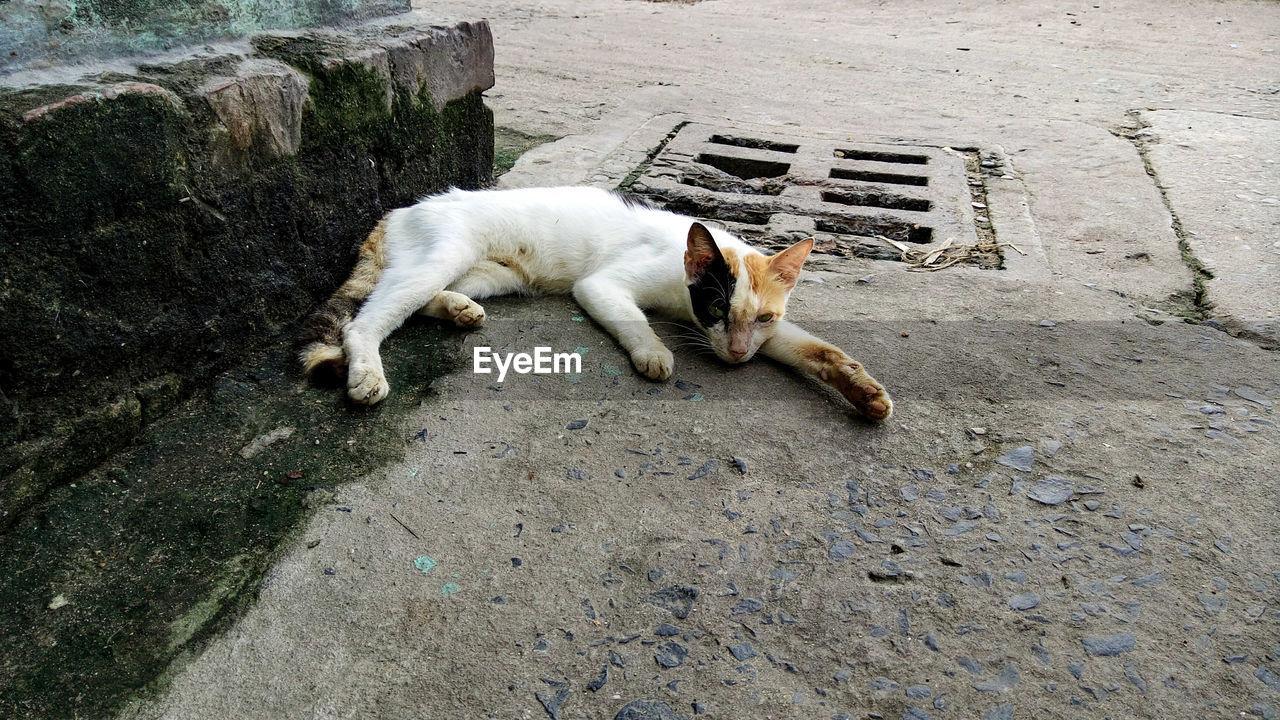 Cat lying on walkway